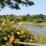 Amiens-Parc-Saint-Pierre-eau-verdure-ballade-détente-somme-hauts-de-france